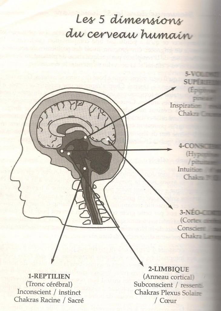 les 5 dimensions du cerveau